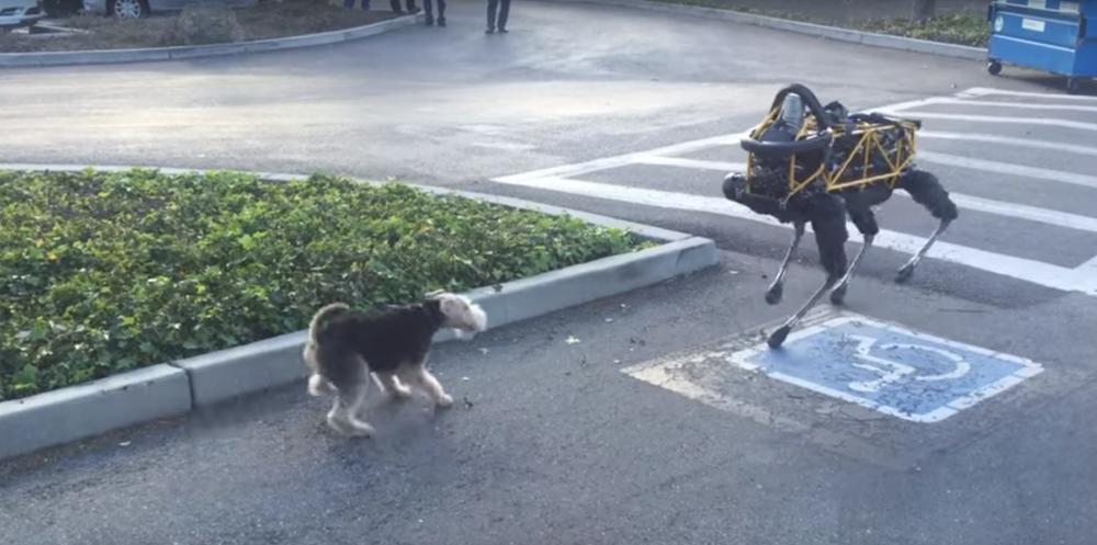 Σκύλος εναντίον ρομπότ: 1-0 (μάλλον)