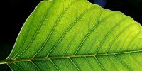 Τεχνητά φύλλα