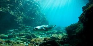 Vodafone: το IoT στην υπηρεσία της προστασίας της μεσογειακής φώκιας