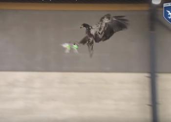 Εκπαιδεύοντας αετούς για την «κατάρριψη» drone